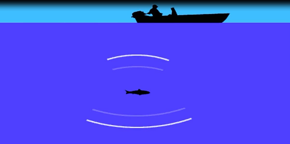 fish finder vs sonar