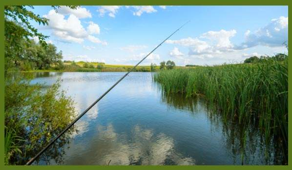 Can You Use A Fish Finder From Shore?