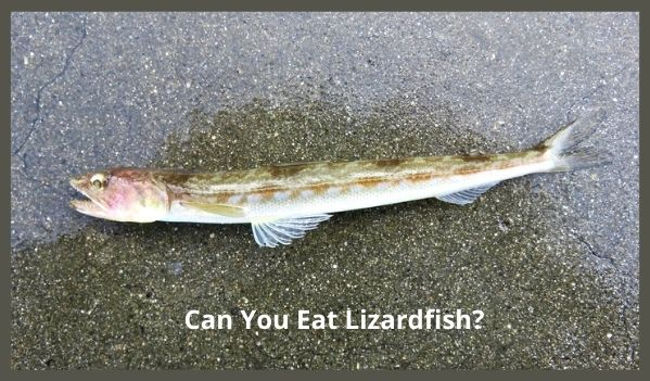 Can You Eat Lizardfish?