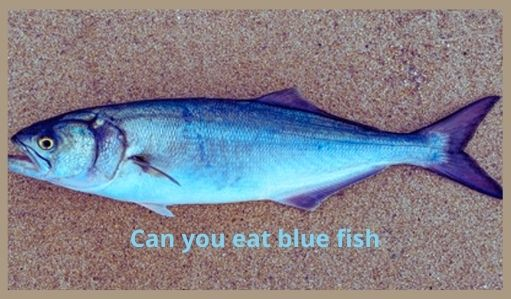 Can you eat blue fish