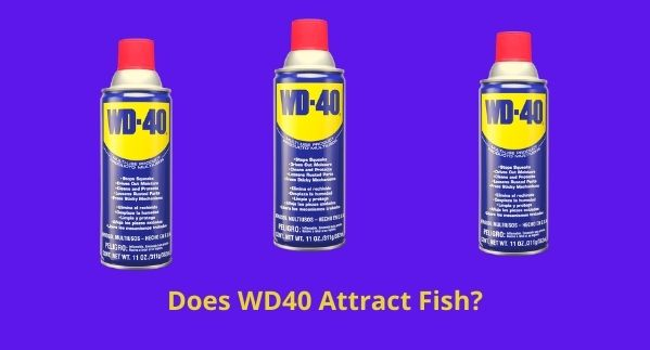 Does WD40 Attract Fish