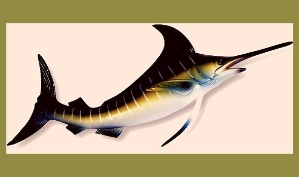 Can you eat blue Marlin
