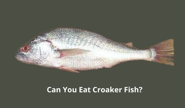 Can You Eat Croaker Fish?